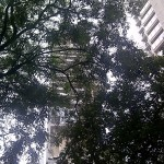 That's Antilla through my Residence Tree